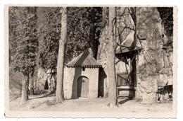 Belgique --MARCHE LES DAMES --Parc Royal...le Vieux Chêne........ ..........à  Saisir - Altri