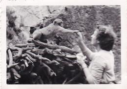 Photo 8.6 X 6.0  - Algerie - BLIDA - Le Ruisseau Des Singes - Octobre 1953 - Places