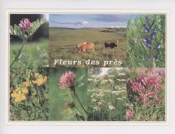 Fleurs Des Prés, Vesce Cultivée, Vesce Faux Sainfoin, Gesse De Pré, Fenouil Et Trèfle Des Alpes (vaches) Debaisieux - Autres
