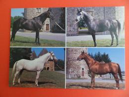 CPSM 1990 - Cheval Etalons Anglo-Arabes -  - Ed. Debaisieux - Cavalli