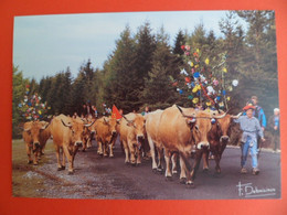 CPSM 1995 - Agriculture - Fete De L' Estive Montée Du Troupeau à La St. URBAIN   - Ed. Debaisieux - Mucche