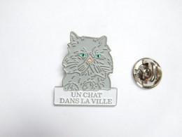 Beau Pin's Pins , Chat , Cat , Un Chat Dans La Ville - Animals