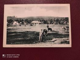 Ancienne Carte Postale  - Vue Generale De La Plantation Lançon A Api - Other