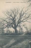 91) DRAVEIL - CHAMPROSAY - Forêt De Sénart - Chêne Prieur - Draveil