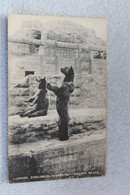 Animaux, Ours, London, Zoological Gardens, Brown Bears, Ours Bruns, Angleterre - Bears