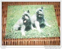 Hund Dog Chien Schnauzer Postkarte - Dogs
