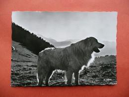 CPSM CHIEN DES PYRENEES    VOYAGEE  1958 TIMBRE - Perros