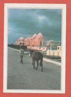 FICHE CARAIBES  CUBA CIMETIERE DE CARDENAS - Mundo
