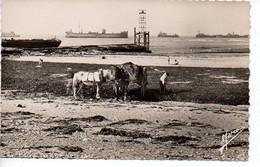 Courseulles Sur Mer : Bateaux Alliés De Protection - Ramassage Du Varech - Courseulles-sur-Mer