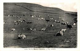 N°83963 -cpa Sur Les Monts D'Aubrac -une Vacherie- - Crías