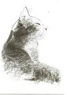 Chat   Dessin  Illustration Aurore De La Morinerie - Gatti