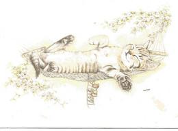 Chat   Dessin  Illustration Maria Slob - Gatti