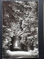 Carte Postale AUGERVILLE-LA-RIVIÉRE: (Loriet) L'Allée Des Marronniers El L'Essonne, 024 - Pithiviers