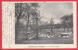 CPA-AVICULTURE - Ets VOITELLIER - 1904- Le Grand Bassin- Carte Commerciale DND -INÉDIT *Scan Recto/Verso - Mantes La Jolie
