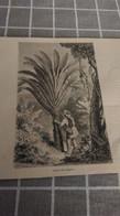 Affiche (dessin) - L'arbre Du Voyageur - Manifesti