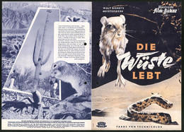 Filmprogramm IFB Nr. 2408, Die Wüste Lebt, Walt Disney, Regie: James Algar, Naturdokumentation - Magazines