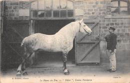 "LE HARAS DU PIN - ""Udier"", étalon Percheron - Cheval - Non Classés"