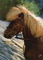 PONEY - LES AVENTURES DE POLY - Paarden