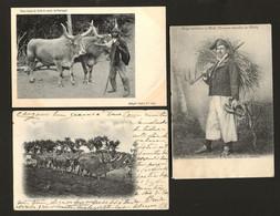 Conjunto 3 Postais Antigos De MINHO Costumes - Edição F.A.Martins + Costa + J.P.da Conceição. NORTE De PORTUGAL - Vila Real