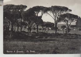 MARINA DI GROSSETO LA PINETA  VG  1955 - Grosseto