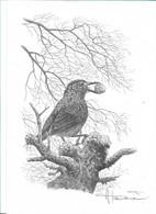 Dessin A4 De A. Buzin - 1985-.. Birds (Buzin)