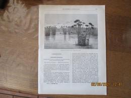 LES MISSIONS CATHOLIQUES DU 16 NOVEMBRE 1883 PONDICHERY (HINDOUSTAN),AFRIQUE OCCIDENTALE CÔTE DES ESCLAVES FLORE MEDICAL - Riviste - Ante 1900