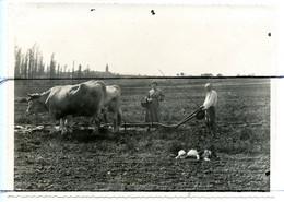 PHOTOGRAPHIE. D71. Montbellet . Labourage De La Terre De LEU.  Charrue A Bœufs . Eglise . Champ  . - Places