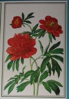 Petit Calendrier De Poche 1992 Création Dobola - Fleur Pivoine Rouge Pharmacie Chambéry Savoie - Small : 1991-00