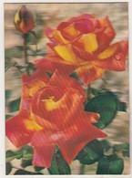 Japan Old Used Postcard  - Toppan - Roses - Cartoline Stereoscopiche