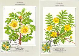 Iceland Island 1984 Flowers,Dune Rose (Rosa Pimpinellifolia), Goose Cinquefoil - Mi 612-613 On Maximumcard Cancelled - Lettres & Documents