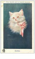 CHATS.n°202.SNOWFLAKE.PLUS BLANCHE QUE LA BLANCHE HERMINE - Katten