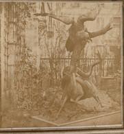 Stéréo Circa 1855-60. Taxidermie. Mise En Scène. Curiosité. Animaux. Opticien Alexis Fay. - Stereoscoop