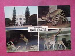 Moçambique - Mozambique - Lourenço Marques - Museu Álvaro De Castro - Mozambique