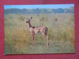 Moçambique - Mozambique - Gorongosa - Impala - Mozambique
