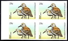 ANTIGUA (1998) Dunlin (Calidris Alpina). Imperforate Block Of 4. Scott No 2205. - Antigua And Barbuda (1981-...)