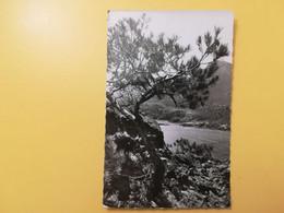 CARTOLINA POSTCARD FRANCIA FRANCE 1953 LE TRAYAS BORD DE MER  BOLLO MARIANNE GANDON - Altri Comuni