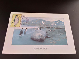 CPA.T.A.A.F. Eléphant De Mer Et Manchots Royaux.  (186) - TAAF : Territorios Australes Franceses