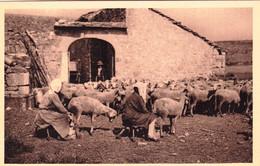 12 - Aveyron - ROQUEFORT -   Ferme Sur Les Causses - Roquefort