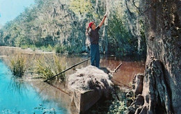 Etats Unis  Louisiane  Garhering Spanish Moss  TBE - Other