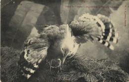 """Oiseau Le """"Cayou"""" Originaire De La Nouvelle Caledonie RV - Uccelli"""