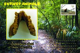Vignettes De Fantaisie, Extinct Animals: Hominoidea, Griphopithecus Alpani - Fantasy Labels