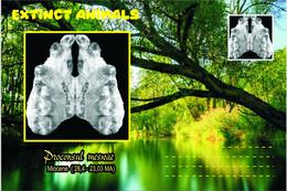 Vignettes De Fantaisie, Extinct Animals: Hominoidea, Proconsul Meswae - Fantasy Labels