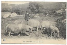 LA CORSE - Troupeau De Cochons... Animé - Ohne Zuordnung