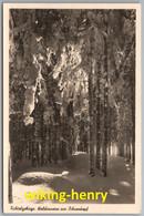 Fichtelgebirge - S/w Waldinneres Am Ochsenkopf - Sonstige