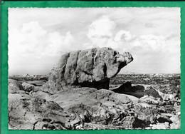 Les îles Chausey (Granville 50) Les Rochers Curieux : L'éléphant 2scans 24-07-1964 Cachet D'un Drakkar Au Verso - Granville