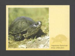 Belarus 2003. Postcard. Fauna Eared Turtle Turtles Reptiles - Bielorussia