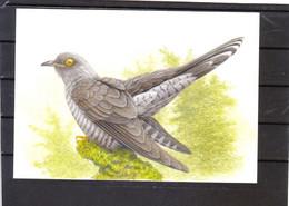 Buzin - Coucou Gris - 1985-.. Birds (Buzin)