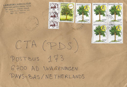 Congo 2013 Pointe Noire Cite Medicinal Plant Root Seeds Moringa Tree Cover - Heilpflanzen