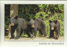 Safari De Peaugres - Ours - Photo Berthillier (P) - Unclassified