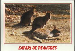Safari De Peaugres- Wallaby De Bennett - (P) - Unclassified